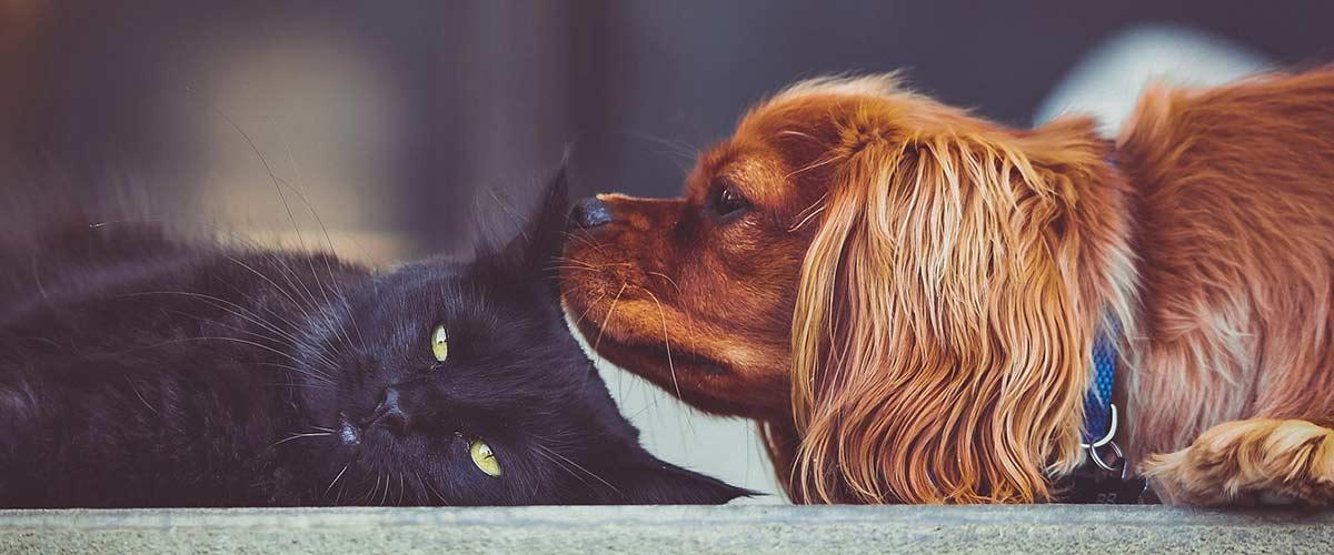 Lebensnotwendige Nährstoffe für Hund und Katze