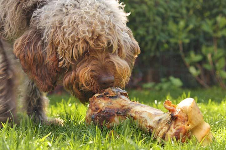 Hund mit Knochen