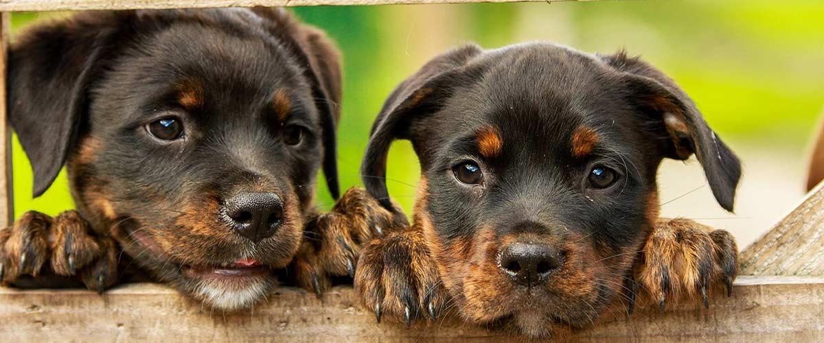 Ernährungstipps für Hunde