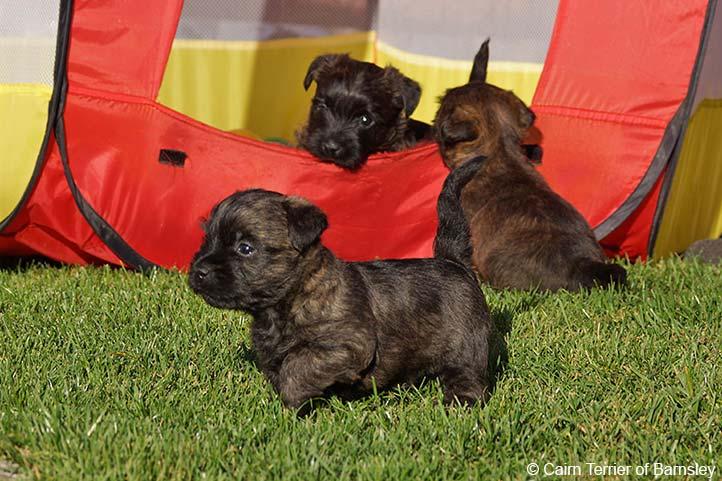 Welpenfutter für Hundewelpen und Junghunde