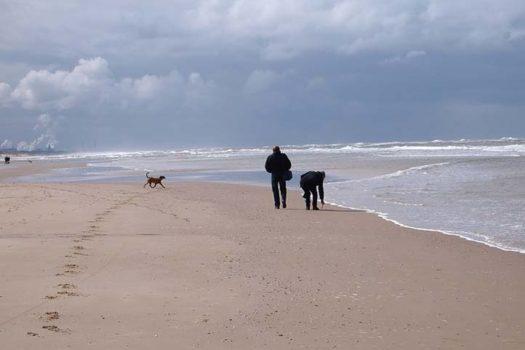 Nordseestrand Holland mit Hund